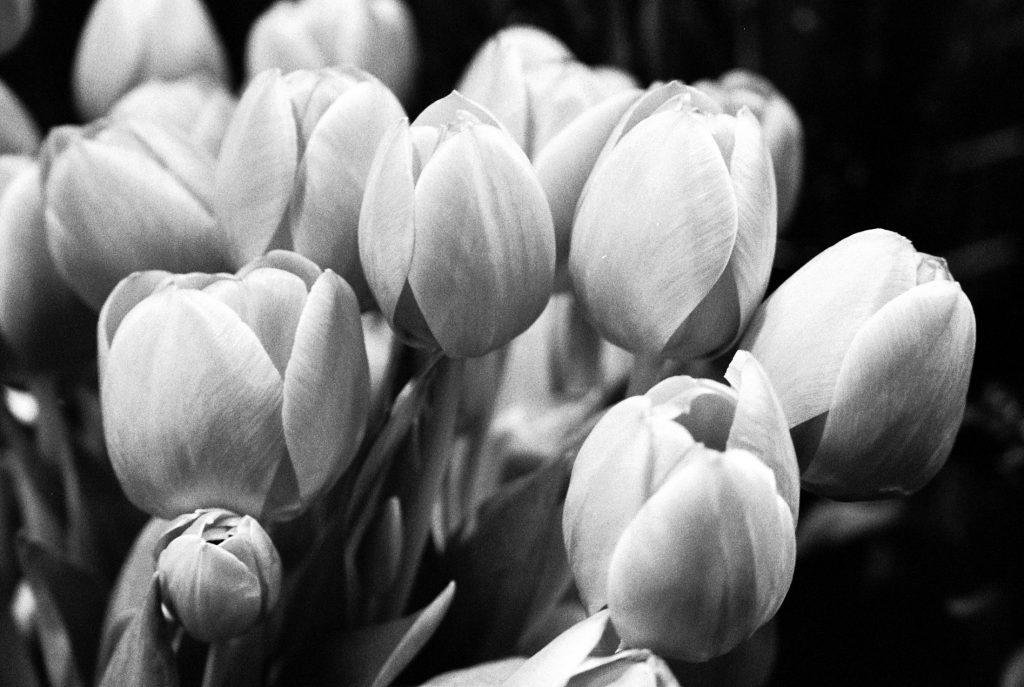 tulipes-de-paris-olga-de-benoist