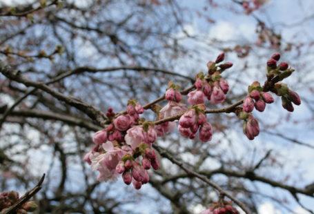 весна в Глазго